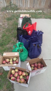 apples_picked